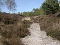Blackwater Hill, valley - geograph.org.uk - 1249887.jpg