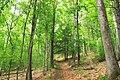 Bob Webber Trail (8) (14413164160).jpg