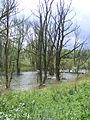 Bomen staande in een meer in de Biesbos.JPG