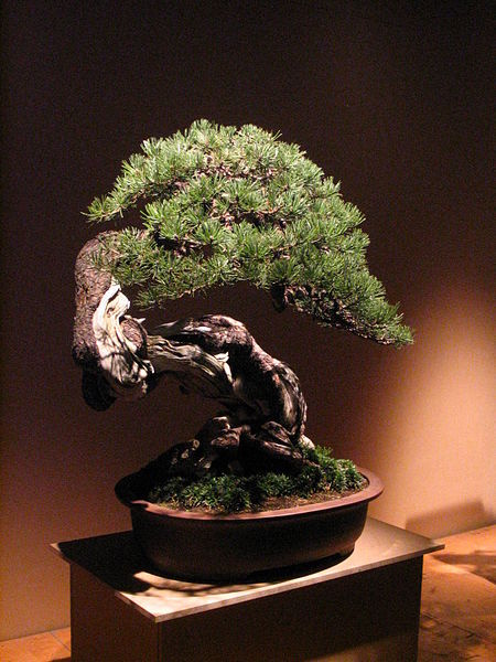 L 39 arte del bonsai for Bonsai ciliegio
