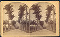 Botanical garden rio bell.jpg