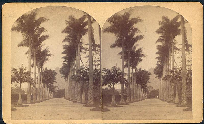 File:Botanical garden rio bell.jpg
