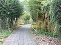 Botanische tuinen Utrecht 21.jpg