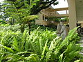 BotanyCentre-SingaporeBotanicGardens.jpg