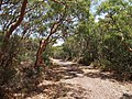 Botany Bay National Park - panoramio (35).jpg