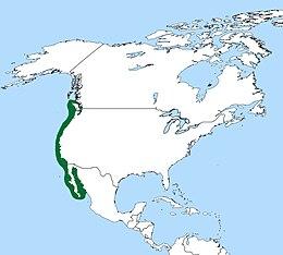 Brandt'scormorantmap