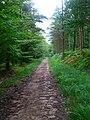 Bridleway, Dallington Forest - geograph.org.uk - 505816.jpg