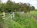 Bridleway south of Stittenham Wood - geograph.org.uk - 264272.jpg