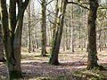 Broad Leafed Trees. - geograph.org.uk - 381027.jpg