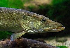puno ribe u moru datira uk spire dating scan bristol