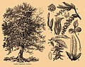 Brockhaus and Efron Encyclopedic Dictionary b35 186-1 cropped2.jpg
