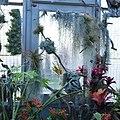 Bromeliaceae II.jpg