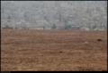 Buiobuione-jordan-Amman-1.tif