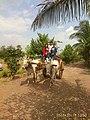 Bullock Cart Ride.jpg