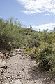 Butcher Jones Trail to Pinter's Point Loop, Tonto National Park, Saguaro Lake, Ft. McDowell, AZ - panoramio (148).jpg