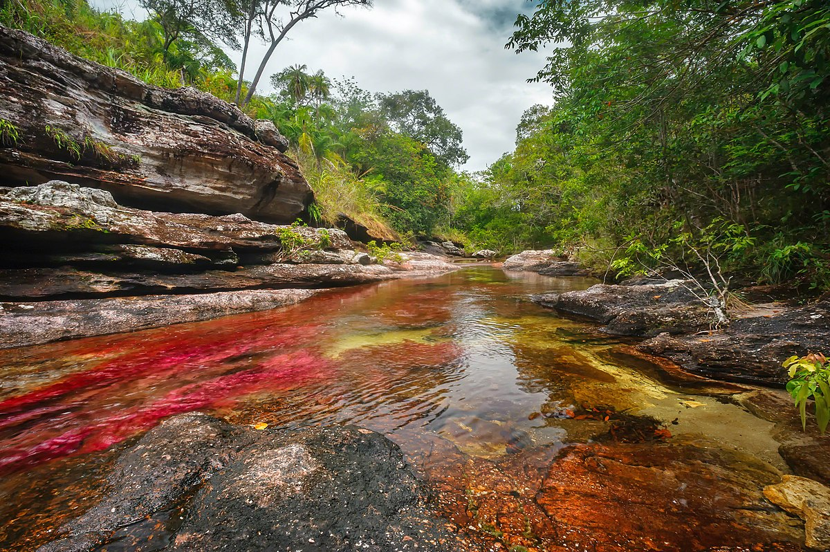 Image result for Caño Cristales