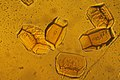 CSIRO ScienceImage 1477 Protein Crystals.jpg
