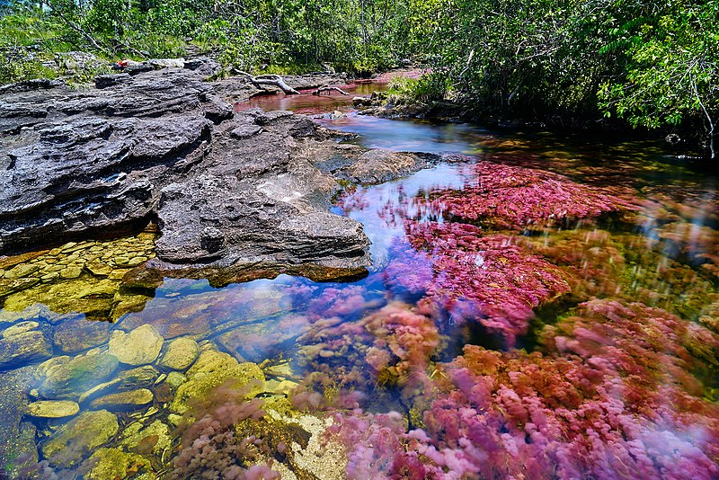 Caño Cristales - The Wonder In Itself