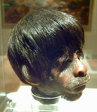 Shrunken head of a mestizo man by Jivaro indigenous people. In 1599, the Jivaro destroyed Spanish settlements in eastern Ecuador and killed all the men. Cabeza reducida Jibaro (M. America, Madrid) 01.jpg