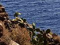 Cactus y mar, Isla de Alicudi, Islas Eolias, Sicilia, Italia, 2015.JPG