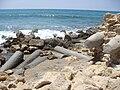 Caesarea Maritima Harbour DSC05248 (7).JPG