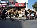 Camels (4179494351).jpg