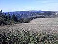 Camino Primitivo, Monte de Penoucos 02.jpg
