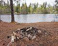 Campfire - Ankeriasjärvi.jpg