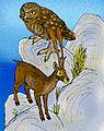 Candiacervus ropalophorus.jpg