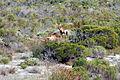 Cape Town 2012 05 16 0005 (7179921577).jpg