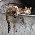 Cat in trash bin.jpg