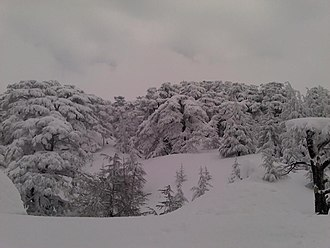 Bsharri - Cedars of god more than 7 meters of snow