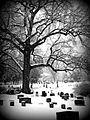 Cemetery Cville b&w snow 2010.jpg