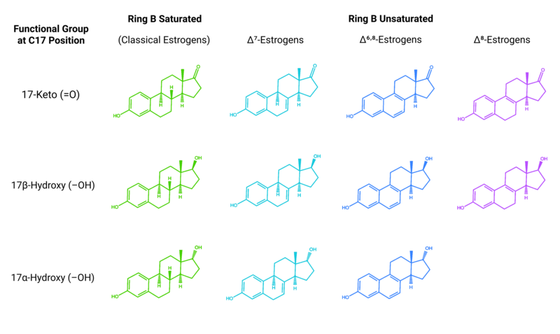 Chemical structures of equine estrogens