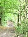 Cherkley Wood - geograph.org.uk - 1395066.jpg