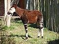 Chester Zoo (8883072279).jpg