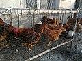 Chicken farm in Stepanakert Bazar.jpg