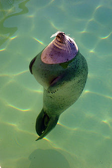 Chill seal.jpg