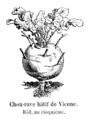 Chou-rave hâtif de Vienne Vilmorin-Andrieux 1904.png