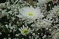 Chrysanthemum white at lalbagh7294.JPG