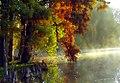 """Cincinnati - Spring Grove Cemetery & Arboretum """"Cypress Tree Needles, Flares & Mist"""" (5997130798).jpg"""