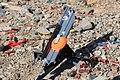 Clay Pigeon Launcher.jpg