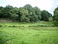 Clearing on the edge of the woods - geograph.org.uk - 890649.jpg