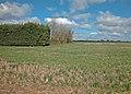 Clifton Road farmland - geograph.org.uk - 884972.jpg