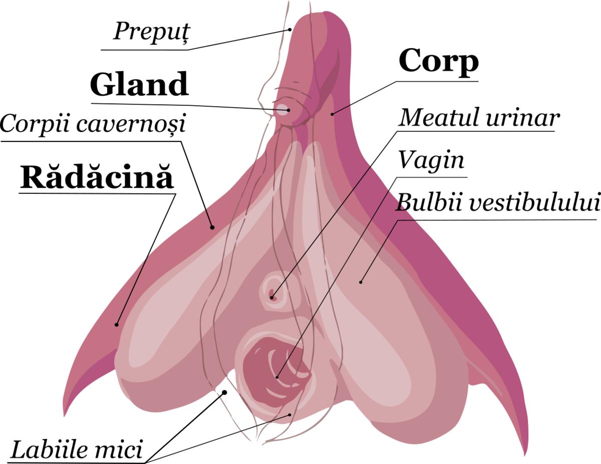 cum să stimulezi o erecție cu o femeie