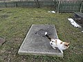 Cmentarz 11 Wsi - panoramio (5).jpg