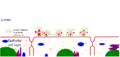 Colonization virulence bacteria.png