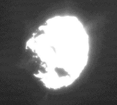 Comet wild 2 jet plumes
