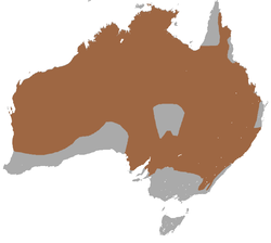 Common Wallaroo area.png