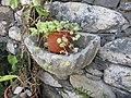Convento de São Bernardino, Câmara de Lobos, Madeira - IMG 0528.jpg